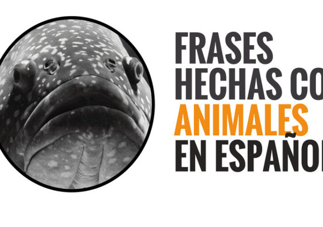 Spanish idioms related to animals