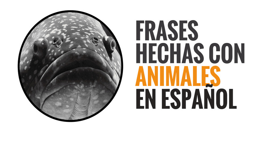 Idioms with animals in Spanish